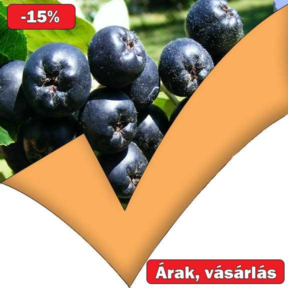 fekete ültetés Ár hpv pozitív meghatározás